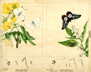 White migrant butterfly and Dainty Swallowtail Butterfly by Helena Scott
