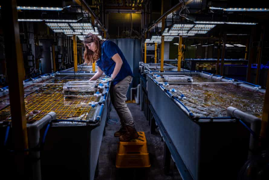 Aims researcher Samantha Jaworski  among tanks of water