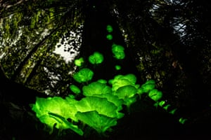 Highly commended, plants and fungiMushroom magic by Juergen Freund, Germany/Australia