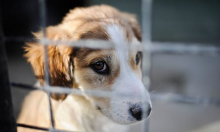 Defra said the ban will make it harder for 'high volume, low welfare breeders' to operate.