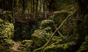 A footbridge at Puzzlewood, Forest of Dean
