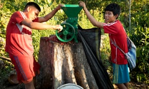 Locals use a grinder to process the ripe red coffee beans. Coffee grows well in the shade and is ideal for the rainforest.