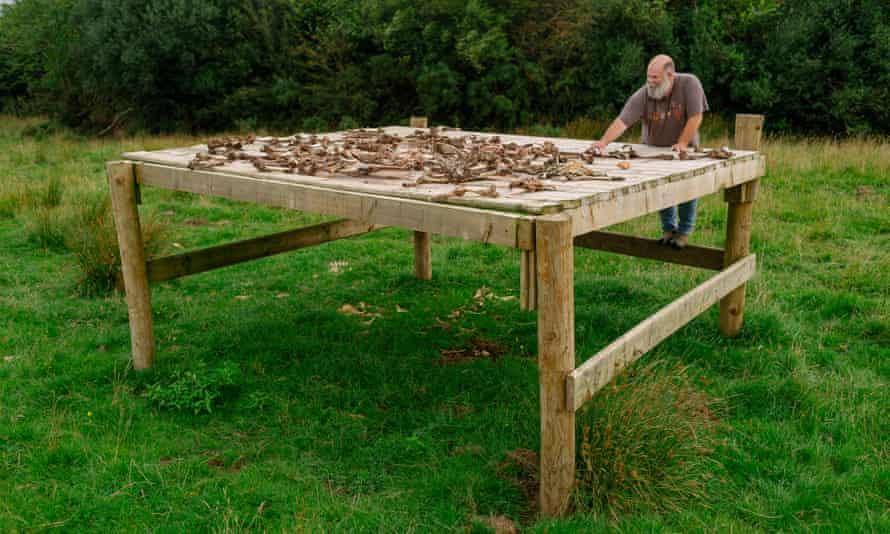 Derek Gow lays out dead livestock on his 'sky table'