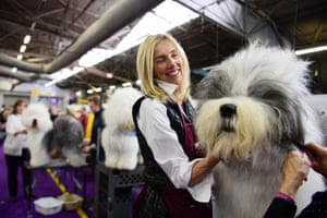 Virginia Goscinak grooms her Old English Sheepdog named Montgomery the Spartan General during the 143rd Westminster Kennel Club Dog Show
