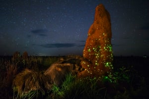 Ecosystem: Terrestrial Wildlife WinnerA termite mound in Emas national Park, Brazil, glows with the light produced by the larvae of click beetles.