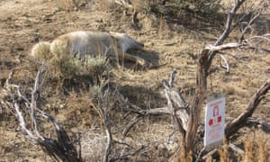 A dead animal lies near a poison warning sign in New Mexico.