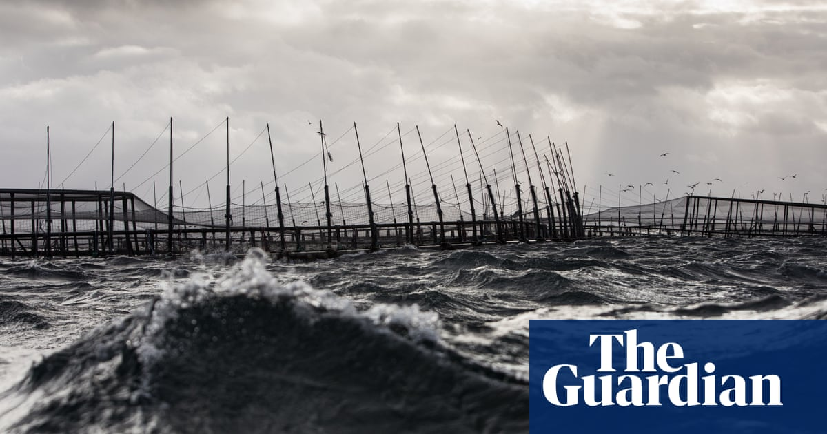 Approval given for $500m takeover of Tasmanian salmon farmer by Brazilian meat processing giant