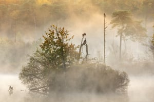 Lage Landen category runner-up:Enjoying the early morning sun by David Pattyn (Belgium) cormorants at the Oisterwijkse Bossen en Vennen nature reserve, the Netherlands