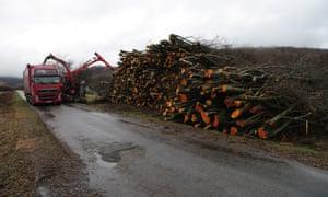 Felled trees in Eastern Slovakia