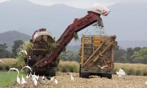 Sugarcane harvesting in Australia