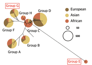 Simplified phylogenetic tree showing the major haplogroups of MUC7, with colors indicating geographic origins of populations belonging to each haplogroup. Figure 2a from Xu et al. 2017