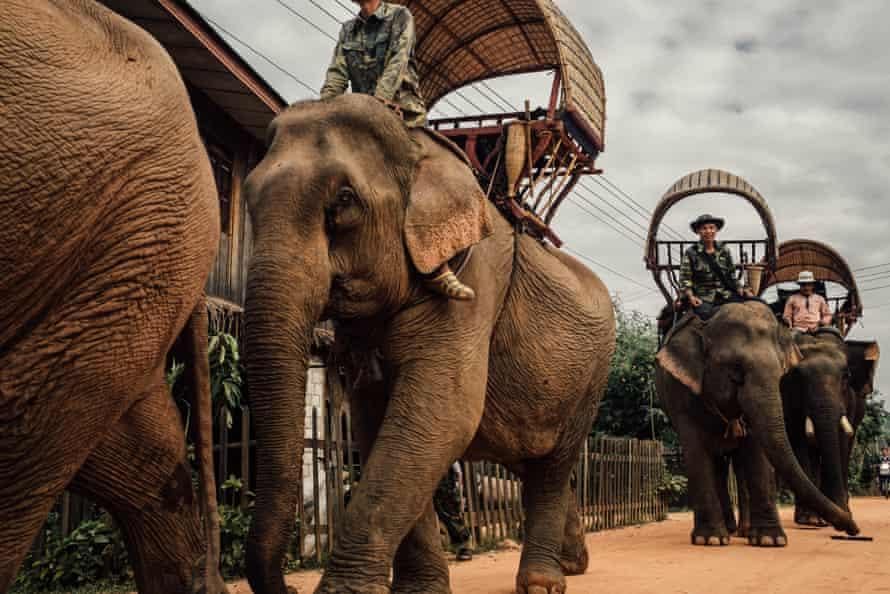 Elephant Caravan, Laos