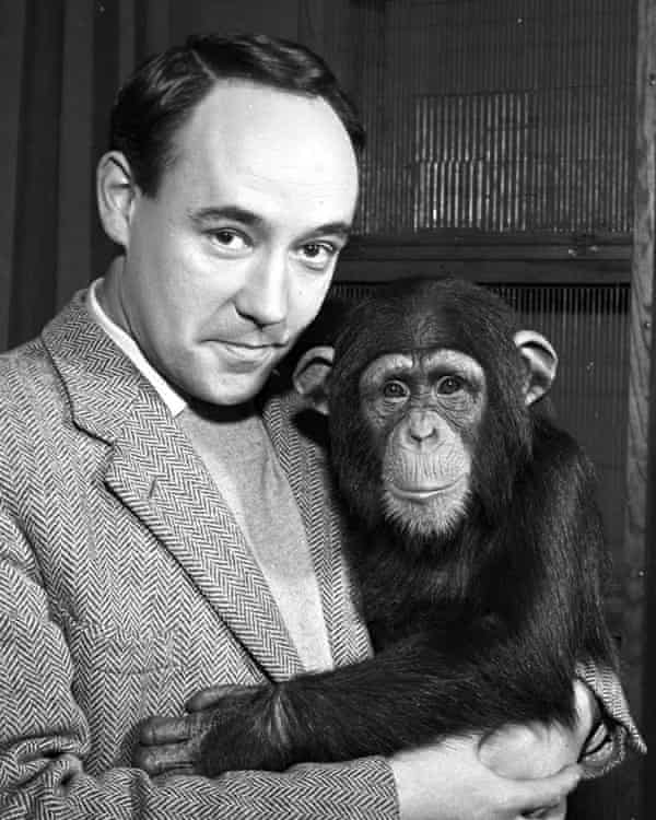Desmond Morris with a chimpanzee in 1961.