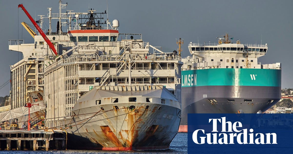 Japan coastguard finds second person in search for crew of capsized cattle ship – The Guardian