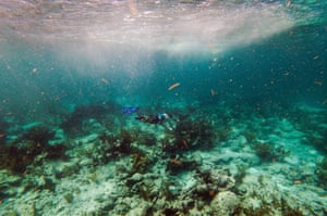 A snorkeller swims over dead coral on the seabed in the strait of Florida near Key Largo.