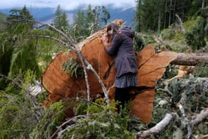 A woman trying to stop the logging of old growth timber, embraces the stump of a large tree near Port Renfrew