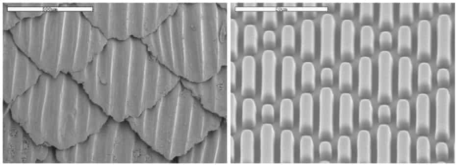 On the left is an image of natural shark skin – on the right is the Sharklet micropattern.