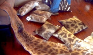 Giraffe-hide covered pillows for sale at The African Market Trophy Room Collection, Florida, March 2018.