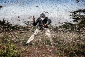 Locust Invasion in East Africa series: Luis Tato, Spain