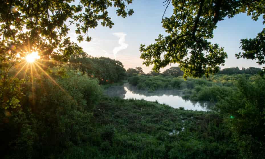 Knepp rewilding project : AC12604 dawn at knepp