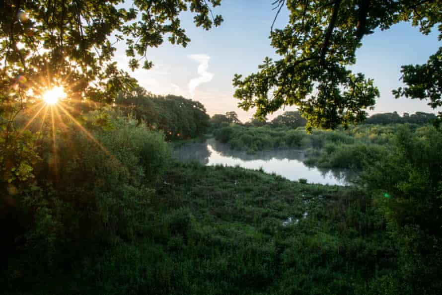 Knepp rewilding project