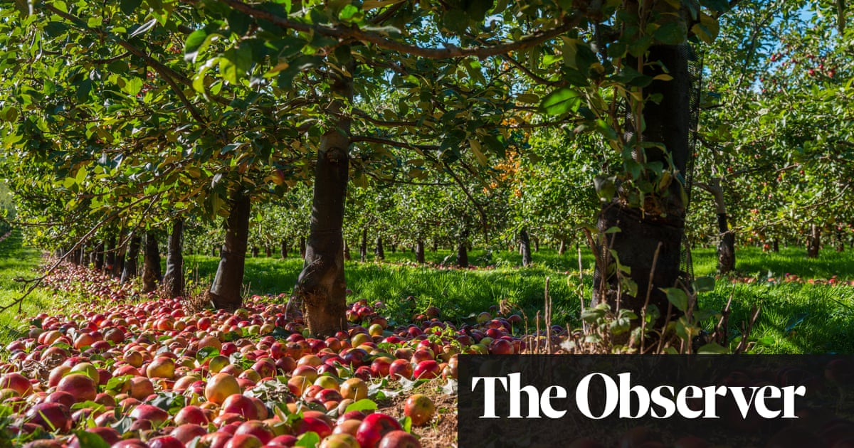 Crunch time: the 10 best places to celebrate Apple Day in Britain