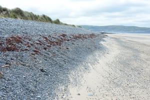 A pebble bank divides the beach from the dunes
