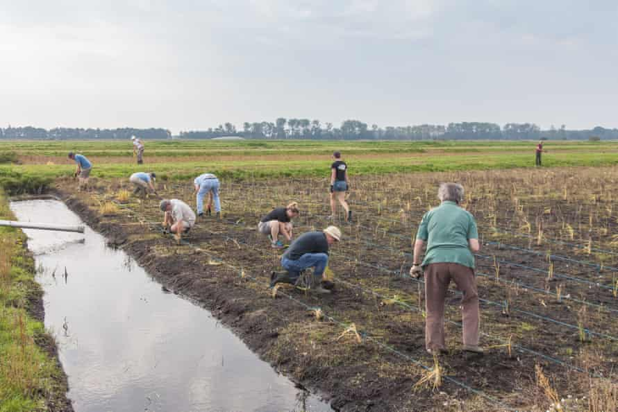 Allowing the water level to rise and planting appropriate crops could help prevent soil erosion and reduce carbon emissions.