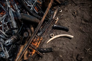 A tusk lies next to a pile of ivory burnt during a ceremony attended by the president of the Democratic Republic of the Congo (DRC), who ignited one tonne of ivory and pangolin scales on 30 September in Kinshasa