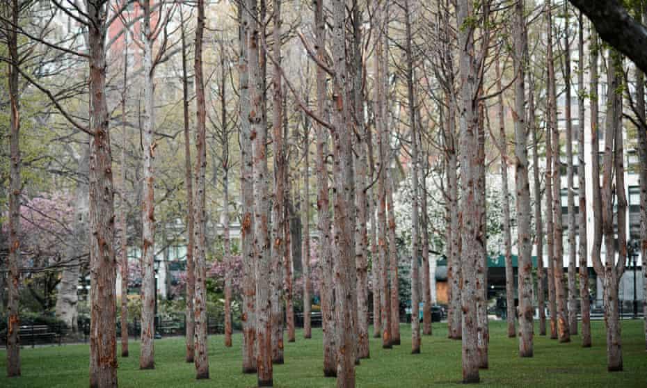 Maya Lin - Ghost Forest