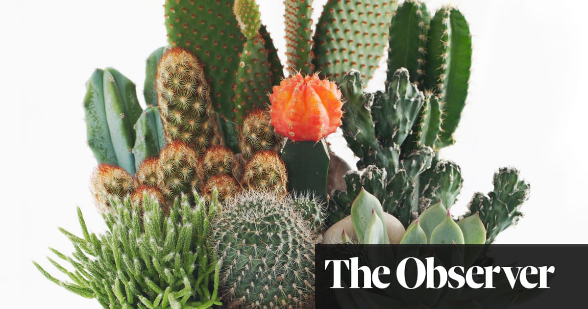 How To Care For Cacti James Wong Life And Style The Guardian