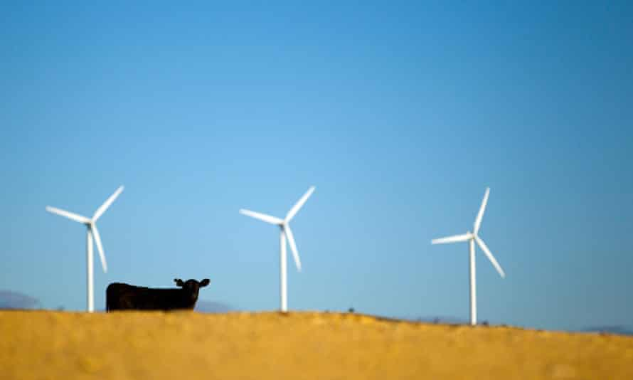 A cow stands near the wind turbines operating on Capital Wind Farm in Bungendore, Australia, on Wednesday, Dec. 22, 2010. The wind farm comprises 67 2.1MW wind turbines with a total installed capacity of 140.7MW, which is equivalent to providing the energy needs of approximately 60,000 homes. The electricity generated at the Capital Wind Farm is fed directly into the TransGrid network via an onsite substation, with the majority of output going on to supply the Sydney Desalination Plant at Kurnell. Photographer: Ian Waldie/Bloomberg via Getty Images ozstock