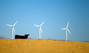 A cow stands by wind turbines