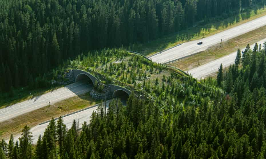 A wildlife overpass in Banff national park, in the Canadian Rockies.