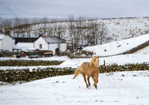 A horse in a snowy field in Langdon Beck