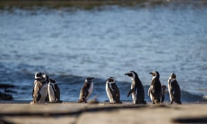 Some 33 penguins were killed by a leopard at a nature reserve near Cape Town.