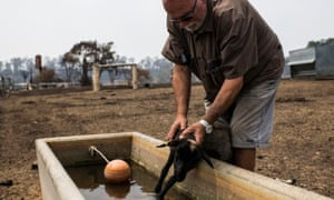 Tom Grant helps an injured and barely-surviving lamb to a water trough on his property near Cobargo.