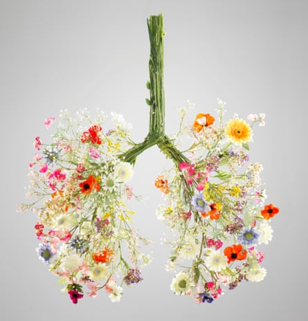 Lungs made from flowersSummer flowers made into the anatomical shape of human lungs