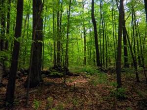 Harvard Forest Massachusetts