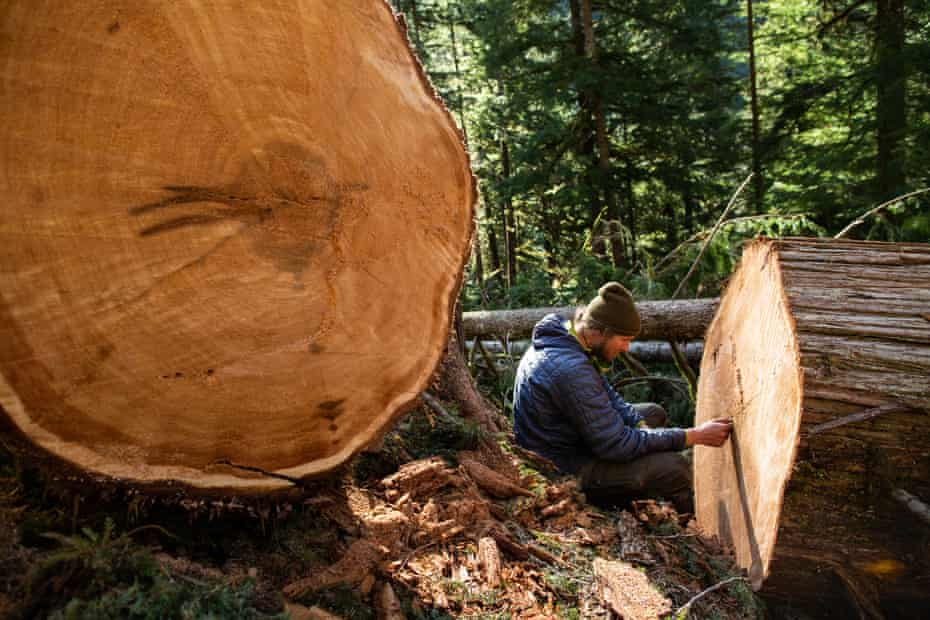 A blockader counts the rings in a recently cut old-growth cedar tree in the mountains above the Caycuse watershed.