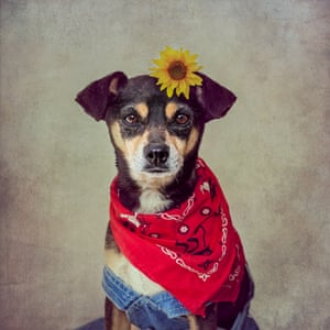 Penny the pup wears a sunflower in her hair