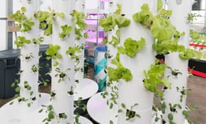 Food grown in vertical tubes