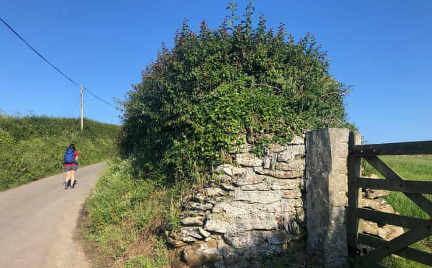 A hedge in Port Quin, Cornwall