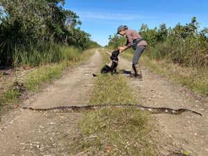 Dog handler Paula Ziadi instructs Truman after he tracked down an 8ft python Miami-Dade County, Florida, USA. The Florida Fish and Wildlife Conservation is beginning a new programme using dogs to sniff out invasive pythons