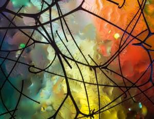 Miró's Garden by Elizabeth Kazda, Wisconsin, United States