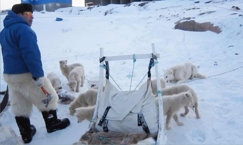 Writer Nancy Campbell's Greenland host, Malik, with his dogsled team.