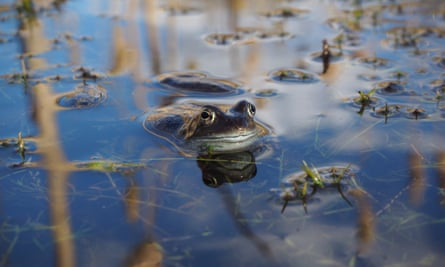 A 360 film of frog mating season