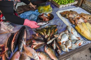 Fish from Tonlé Sap for sale in a market.