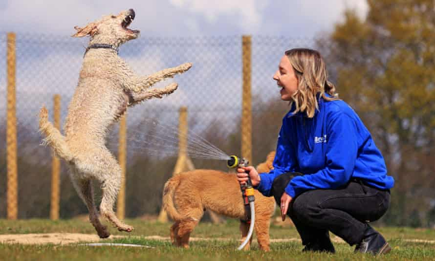 Georgina Snow of Bruce's Doggy Day Care cools off Max the poodle and Roxie the Nova Scotia.