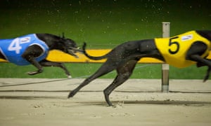 The Australian Capital Territory has banned greyhound racing and says the industry is deeply flawed.